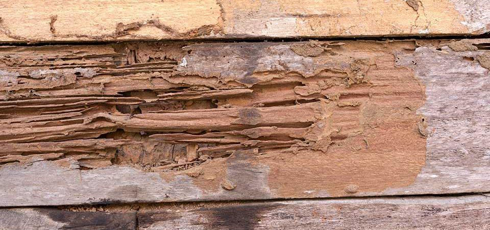 termite-damage-e1514482550473